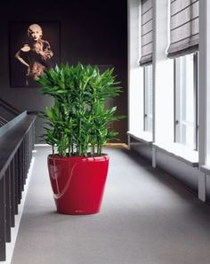 Naordinujte si šesť rastlín do obývačky Ikebana, Feng Shui, House Plants, Planter Pots, Gardening, Nature, Flowers, Paris, Naturaleza