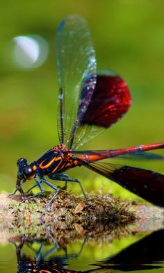 https://wallpaperscraft.com/download/dragonfly_insect_close_up_114695/480x800