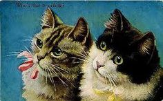 「cats postcards」の画像検索結果