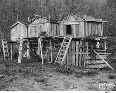 Athapascan fishing camp on the Yukon River, Alaska, ca. 1904 :: American Indians of the Pacific Northwest -- Image Portion Alaska Tours, Yukon River, Fishing Photos, Native American Indians, Native Americans, University Of Washington, Arctic Circle, Fish Camp, Historical Pictures