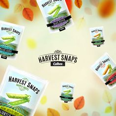 If only free bags of Harvest Snaps fell like the leaves. What a wonderful world that would be.