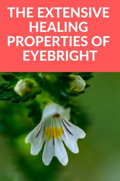 Eyebright is a plant with many healing properties, it can even cure eye floaters. Read about the extensive uses of this wonderful plant Pain In The Ear, Eye Infections, Muscle Weakness, Sinus Congestion, Eye Sight Improvement, Runny Nose, 3rd Eye, Eye Strain, Herbal Remedies