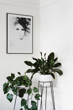Powered By Plants! 28 Interior Design Ideas For Every Indoor Plant Lover