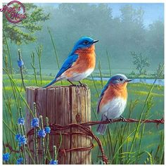 thursday - on the house - Diamond Painting- Full Drill Standing Birds Scenery Pictures, Bird Pictures, Mosaic Pictures, Exotic Birds, Colorful Birds, Pretty Birds, Beautiful Birds, Graffiti Kunst, Tier Fotos