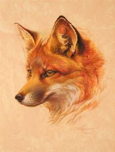 new ideas tattoo ideas animals red fox Wildlife Paintings, Wildlife Art, Animal Paintings, Animal Drawings, Fuchs Tattoo, Fox Drawing, Drawing Pin, Fox Pictures, Fox Painting
