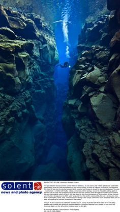 Alex Mustard, 36, dived 80ft into the  crevice between the North American and Eurasian plates near Iceland to  capture these spectacular photos .