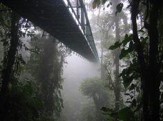 Panama's Chiriqui Highlands - Cloud forest Canopy walk. Photograph taken by Dirk van der Made