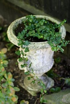 Keep a permanent trailing vine in your containers. They will return year after year. All you need to do is add some annuals each year.