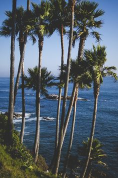 Palm trees forever.