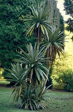 Beginner's Guide To Tropical Landscaping Design Plans – My Best Rock Landscaping Ideas Tropical Backyard Landscaping, Landscaping Around Pool, Florida Landscaping, Landscaping With Rocks, Landscaping Plants, Landscaping Ideas, Backyard Ideas, Garden Ideas, Pool Plants