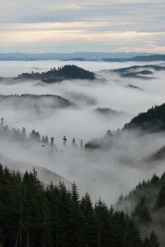 willamette valley, oregon.
