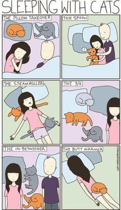 So true. How to sleep with cats