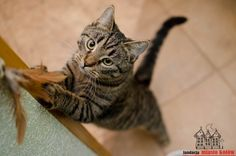 Giga is looking for a home ... #cute #cutecats #cats #caturday #kot #koty #neko #gato #katz #katzen #kittens #chat