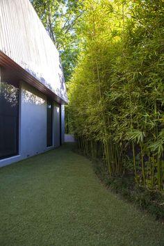 Ivanhoe - Ben Scott Garden Design | Gracilis Bamboo