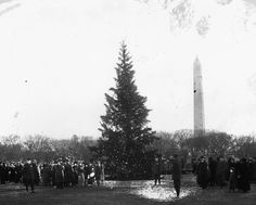 The very FIRST official National Christmas Tree! In 1923, President Calvin Coolidge began the tradition of lighting the tree in a formal ceremony. The Capitol Christmas Tree, which attracts thousands of visitors each year, is part of a larger outdoor exhibit that features miniature train sets and dozens of smaller trees decorated with ornaments representing all 50 states, five U.S. territories and the District of Columbia.