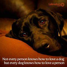 love labrador quotes face