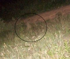This was taken in the triangular field at Gettysburg on July 3, 2005. It was late and no one else was in the field but us. We were just taking random pictures on the way out. It appears to us this could be a soldier in lower field. After reviewing this we went back the next week and looked for any signs of rocks, logs or anythng that could explain what is in the pic. There was nothing there.
