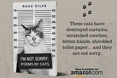 I'm Not Sorry: Poems by Cats - The Purrington Post