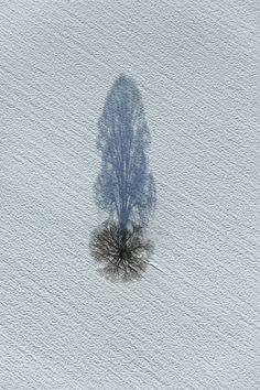 Shadow Tree | by Klaus Leidorf