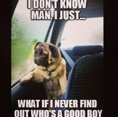 Dogs haha