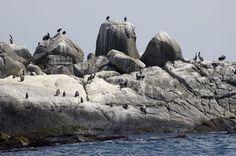Isla de los Pingüinos, na praia Cachagua, em Viña; o turista pode observar à distância pingüins e aves, inclusive no verão #Chile