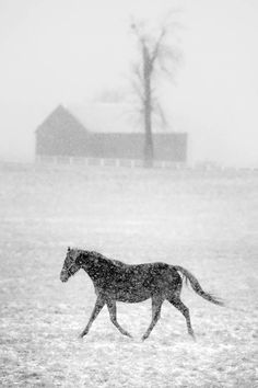 Horse in a winter blizzard