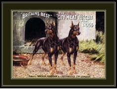 vintage posters with dogs | THE MYSTIC SERENITY NOTECARD COLLECTION - Dog - Doberman Pinscher