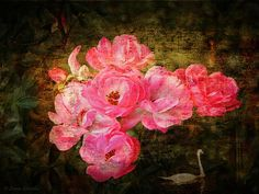 The Romance of Roses by Lianne Schneider Original photograph with applied textures.