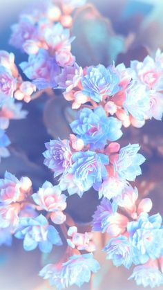 Blue and pink flower wallpaper for your phone