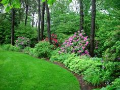 The border early in the season with both Rhododendron 'Roseum Elegans' and Rhododendron 'Nova Zembla Wooded Backyard Landscape, Forest Landscape, Landscape Design, Garden Design, Garden Shrubs, Shade Garden, Garden Paths, Woodland Garden, Traditional Landscape