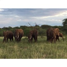 """April 11, 2015: """"Some elephants watching us closely as we pass by in Tarangire, Tanzania."""" Photo by Mark Visser"""