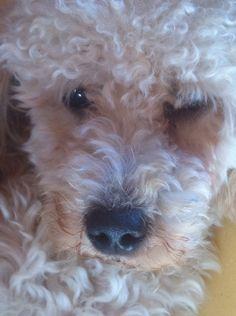 Il cane è tutto nel suo sguardo 💖