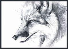 gray red fox by ~Tervola on deviantART