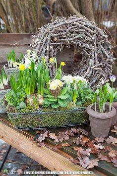 spring bulbs in bloom in vintage pots with twig wreath Trädgårdsflow