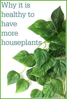 Why we should make our homes greener and why it is healthy to have more houseplants