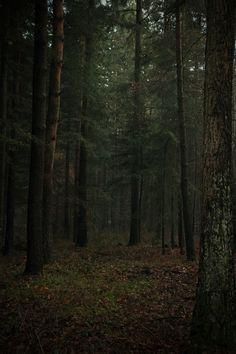 Wald2 by Martin Ackermann