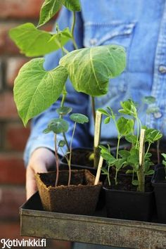 Diy Flowers, Bouquet, Plants, Indoor Gardening, Decor, Spring, Balcony, Ideas, Food