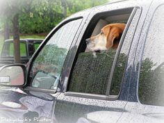 ¿Por qué mi perro se hace pis en el coche? | Cuidar de tu perro es facilisimo.com