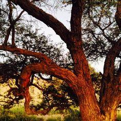 Reise nach Namibia - Genießen Sie 25 € bei Airbnb, Link im Profil Namibia, Link, Plants, Profile, Travel, Plant, Planting, Planets