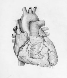 anatomical heart | Anatomical Heart Tattoo Inspired By Medical Illustrator Sketch Design ...