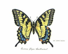 Butterfly Theory, Yellow Butterfly Tattoo, Butterfly Drawing, Butterfly Tattoo Designs, Butterfly Embroidery, Butterfly Painting, Science Illustration, Nature Illustration, Flower Tattoo Foot