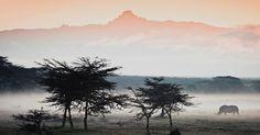 Rinocerontes caminham perto do monte Qu�nia num dia nublado. Os rinocerontes brancos s�o herb�voros e residem nas plan�cies da �frica