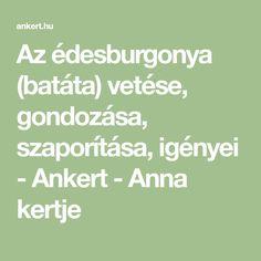 Az édesburgonya (batáta) vetése, gondozása, szaporítása, igényei - Ankert - Anna kertje