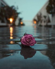 Rose on the wet road The post Rose on the wet road appeared first on hintergrundbilder. Desktop Background Pictures, Cute Wallpaper Backgrounds, Tumblr Wallpaper, Pretty Wallpapers, Aesthetic Iphone Wallpaper, Aesthetic Wallpapers, Background Images For Quotes, Tumblr Roses, Beautiful Nature Wallpaper