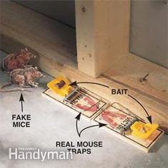 How to Keep Mice Away & Have a Mouse Free House Getting Rid Of Raccoons, Get Rid Of Squirrels, Getting Rid Of Mice, Killing Mice, Keep Mice Away, Dead Mouse, Borax Powder, Bug Off, Home