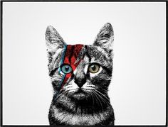 I'm not a big fan of cats but David Bowie man Mayor Tom, Animals And Pets, Cute Animals, Bowie Labyrinth, Cat People, Expo, Glam Rock, David Bowie, Cool Cats