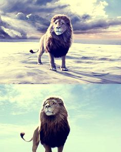 I love how CS Lewis made Jesus in the form of a Lion because it shows just how majestic and strong Jesus is