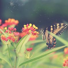 Butterfly fly away.