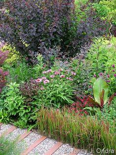 Physocarpus opulifolius 'Monlo' (Diabolo) behind Echinacea purpurea 'Magnus', Imperata cylindrica 'Rubra', and Ensete ventricosum 'Maurellii'