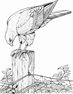 Bird Coloring Book for Adults Inspirational Realistic Printable Drawing Pages Of Hawk In Hard Bird Coloring Pages for Adults Turkey Coloring Pages, Coloring Pages To Print, Coloring Book Pages, Coloring Pages For Kids, Bird Drawings, Realistic Drawings, Animal Drawings, Drawing Animals, Eagle Drawing
